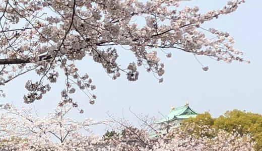 KKRホテル名古屋で珠算総会があった帰りに名古屋城の桜を満喫!